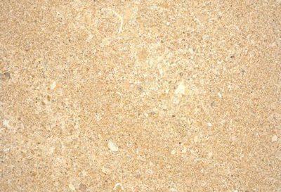 Piedra Nogal